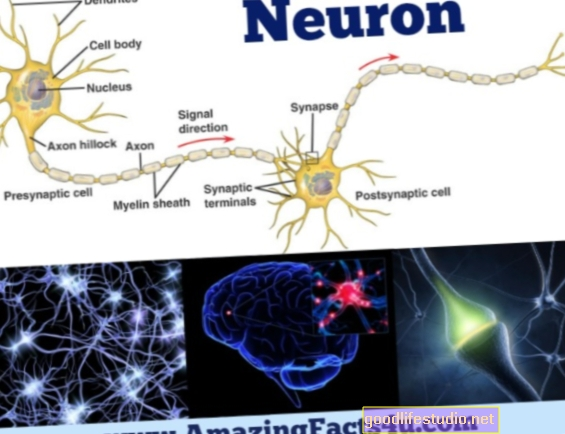 The Amazing Neuron: Facts About Neurons, Part 2