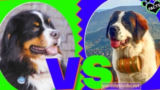 Kurš ir labākais suns, tavs racionālais vai emocionālais es?